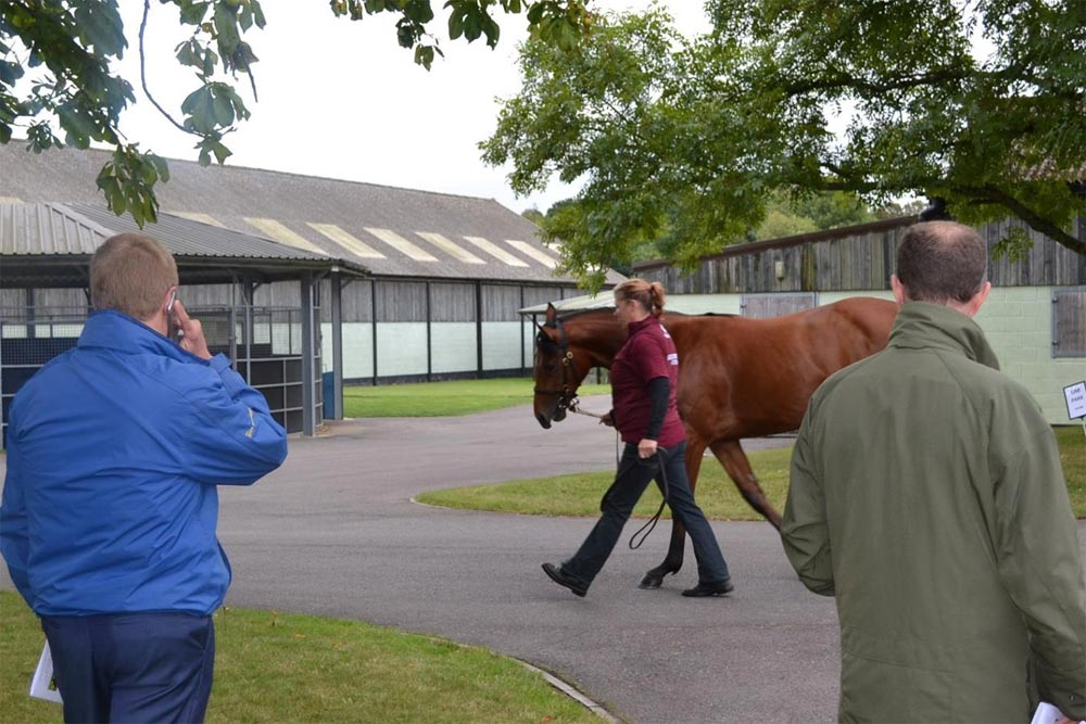 Heatherwold Stud Open Day 2016 yearling parade
