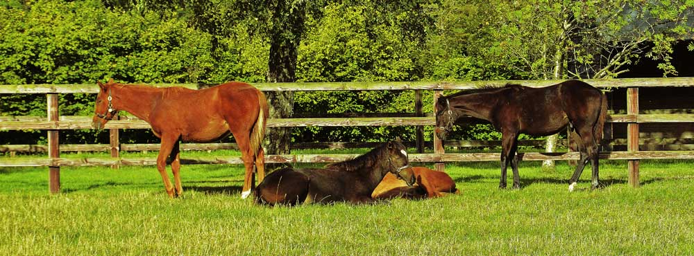 Foals at Heatherwold Stud