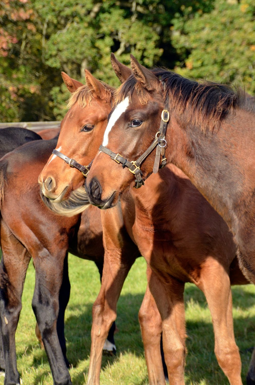 Morzine and Nur Jahan Foal pic. owners