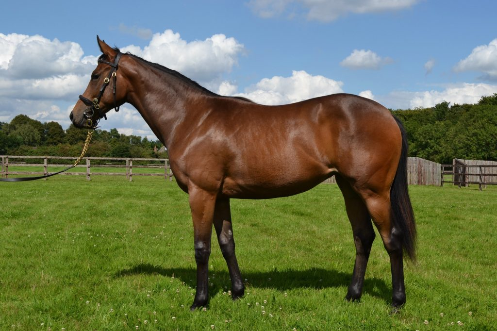 Charm Spirit x Sea Chorus Yearling Filly