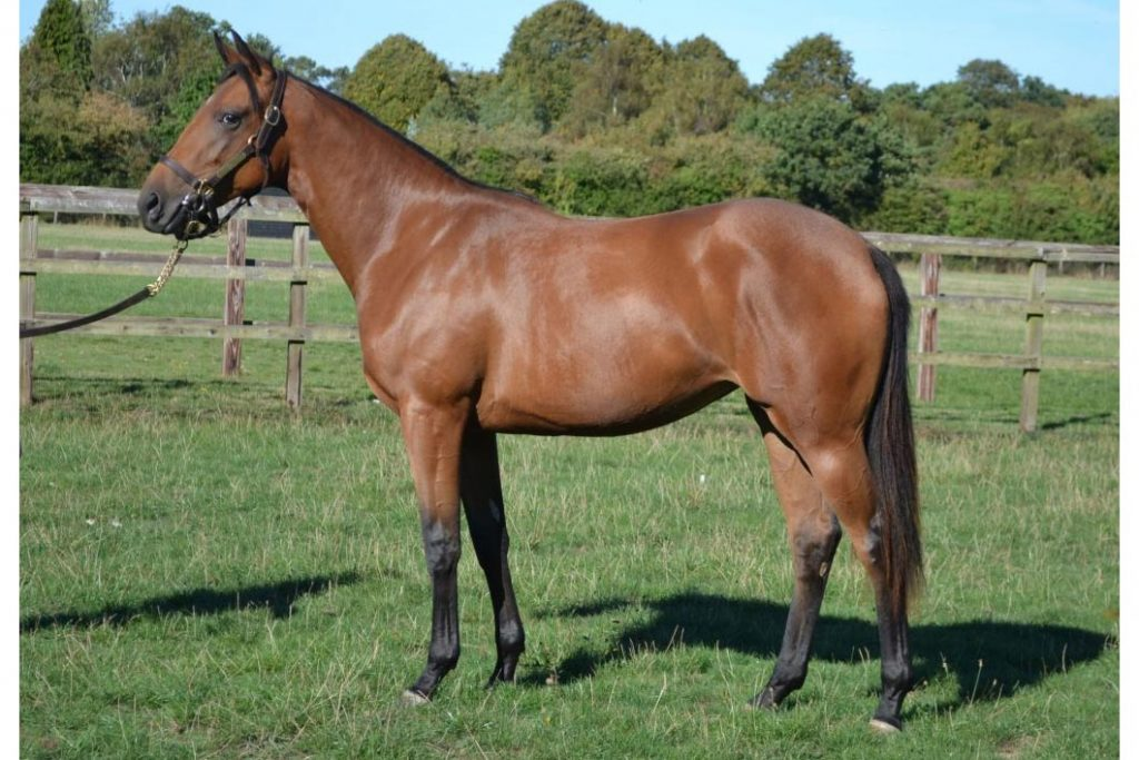 bay filly by Golden Horn out of Morzine