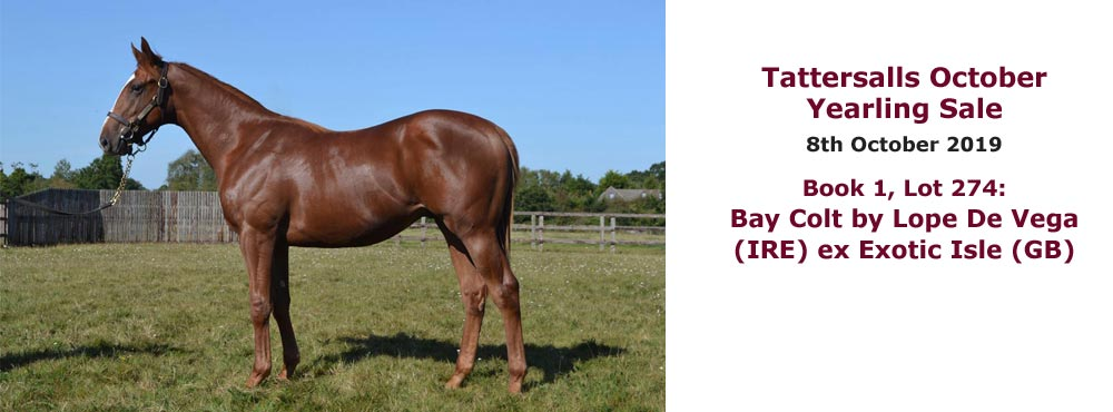 Sales profile Bay Colt by Lope De Vega (IRE) ex Exotic Isle (GB) 8 Oct 2019 Tattersalls October Yearling Sale
