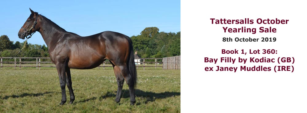 Sales profile Bay Filly by Kodiac (GB) ex Janey Muddles (IRE) 8 Oct 2019 Tattersalls October Yearling Sale