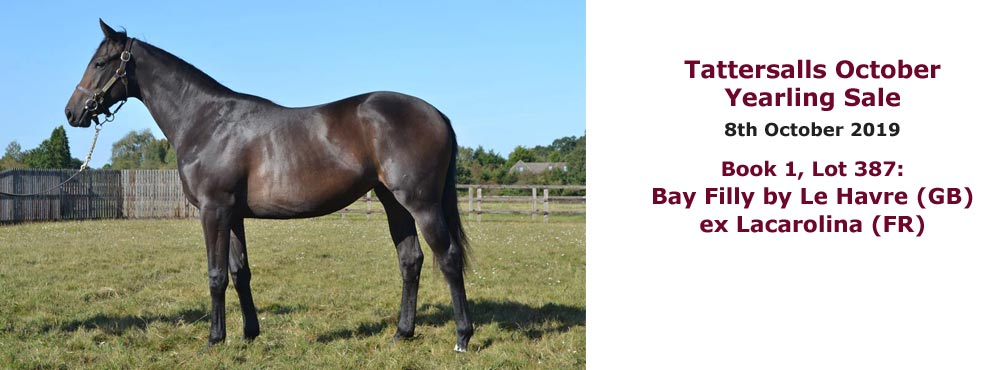 Sales profile Bay Filly by Le Havre (GB) ex Lacarolina (FR) 8 Oct 2019 Tattersalls October Yearling Sale