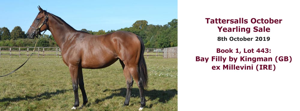 Sales profile Bay Filly by Kingman (GB) ex Millevini (IRE) 8 Oct 2019 Tattersalls October Yearling Sales