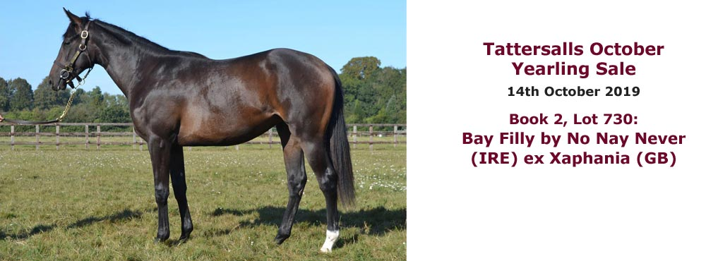 Sales profile Bay Filly by No Nay Never (IRE) ex Xaphania (GB) 14 Oct 2019 Tattersalls October Yearling Sale