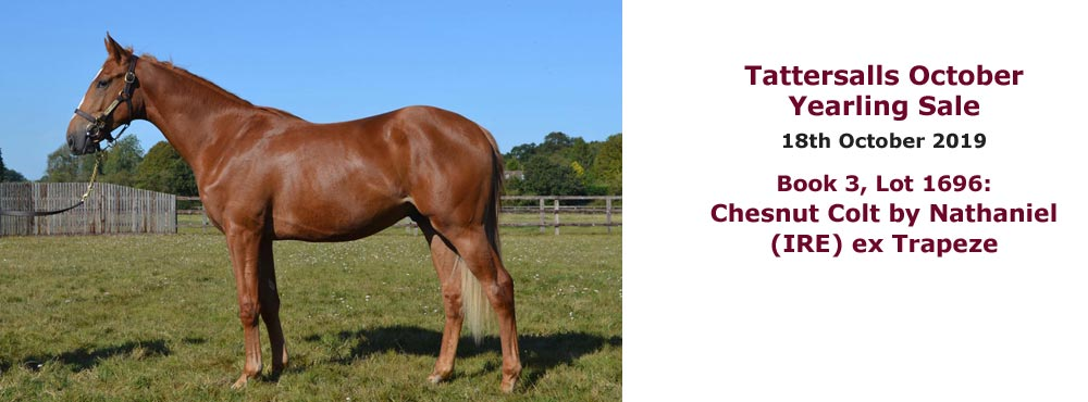 Sales profile Chesnut Colt by Nathaniel (IRE) ex Trapeze 18 Oct 2019 Tattersalls October Yearling Sale
