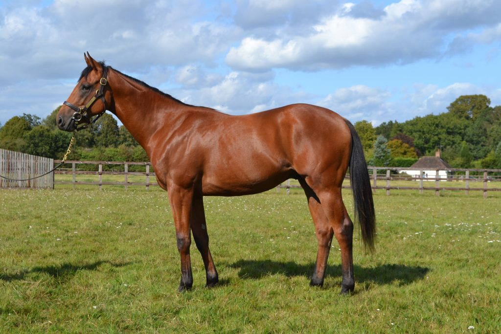 Heatherwold Stud yearling by Charm Spirit out of Portrait