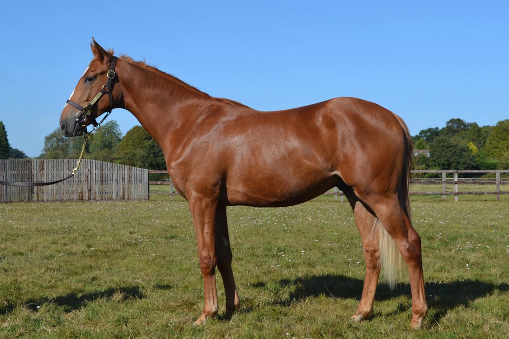 Chesnut Colt by Nathaniel (IRE) ex Trapeze at Heatherwold Stud
