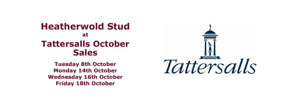 Heatherwold Stud at Tattersalls Autumn Sales 2019