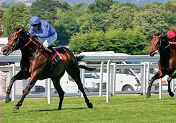 Windhoek triple Listed race winner bred at Heatherwold Stud
