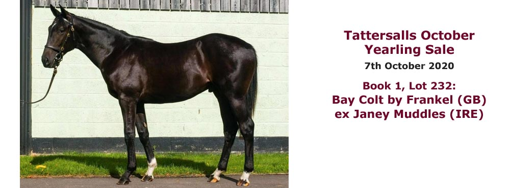 Bay colt by Frankel ex Janey Muddles consigned by Heatherwold Stud to Tattersalls October Yearling Sales 2020