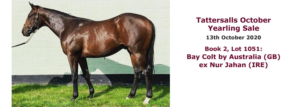 Bay colt by Australia ex Nur Jahan consigned by Heatherwold Stud to Tattersalls October Yearling Sales 2020