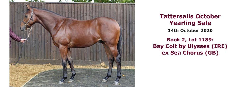 Bay colt by Ulysses ex Sea Chorus consigned by Heatherwold Stud to Tattersalls October Yearling Sales 2020