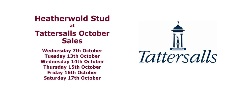 Intro panel for Heatherwold Stud at Tattersalls October sales 2020