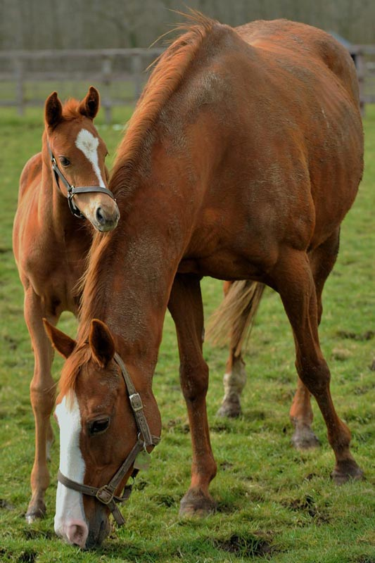 Castaway Queen and foal at Heatherwold Stud