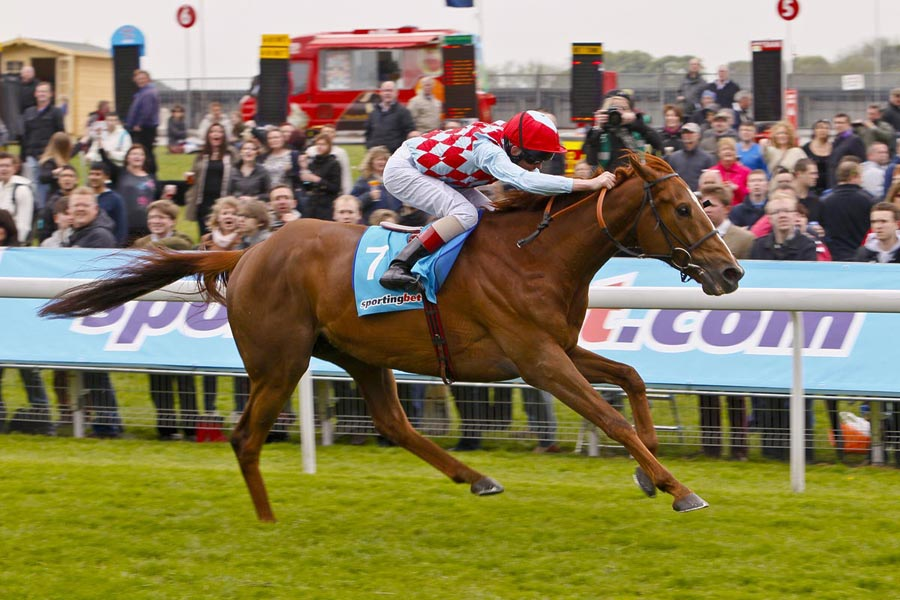 Red Cadeaux triple Melbourne Cup runner-up