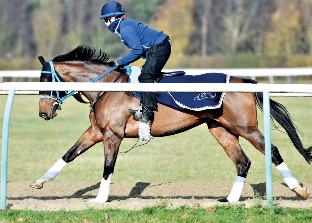 Boarder exercising at Heatherwold Stud
