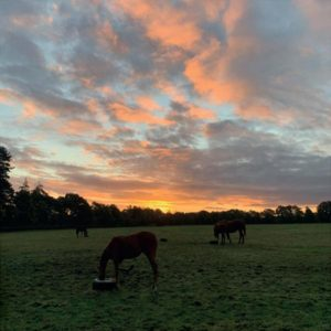 sunset over the paddocks at Heatherwold Stud
