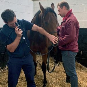 vet services at Heatherwold Stud