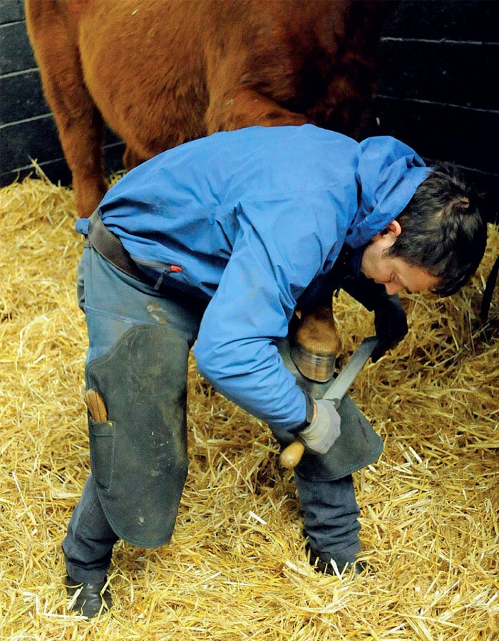 The farrier is a key part of the team