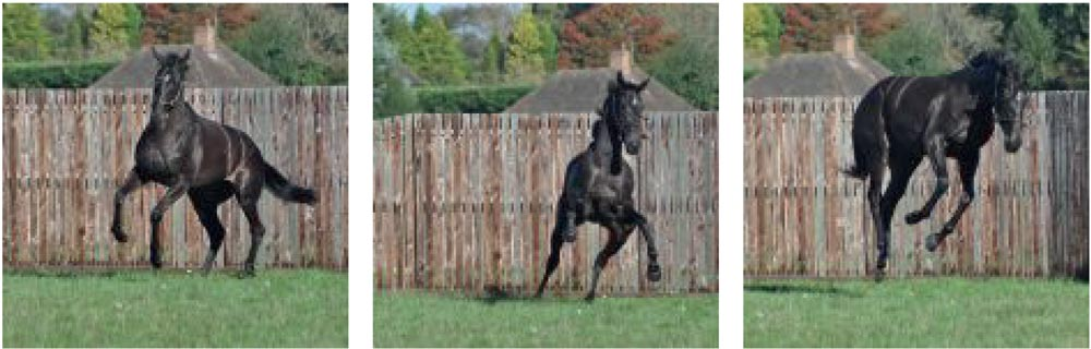 Heatherwold Stud is the perfect place for racehorses to let their hair down