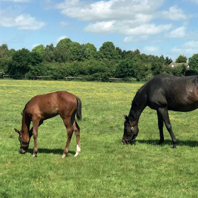 summer mare and foal image at Heatherwold Stud
