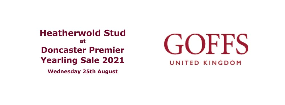 Heatherwold Stud at Doncaster Premier Yearing Sale 2021